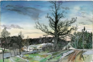 """My Favorite Tree, Marlboro, Vermont, April 1996, ink and watercolor, 22""""X15"""""""