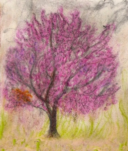 "Portland Oregon Cherry Blossoms, January 2005, pastels, 5""X7"""