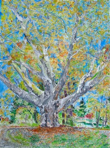 """Reed College London Plain Tree, East Portland, Oregon, November 2014, ink and watercolor, 22""""X30"""""""