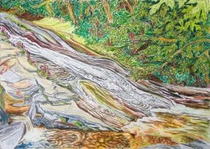 "Slides at Lake Creek, Triangle Lake, Oregon, ink and pastels, 22""X15"""